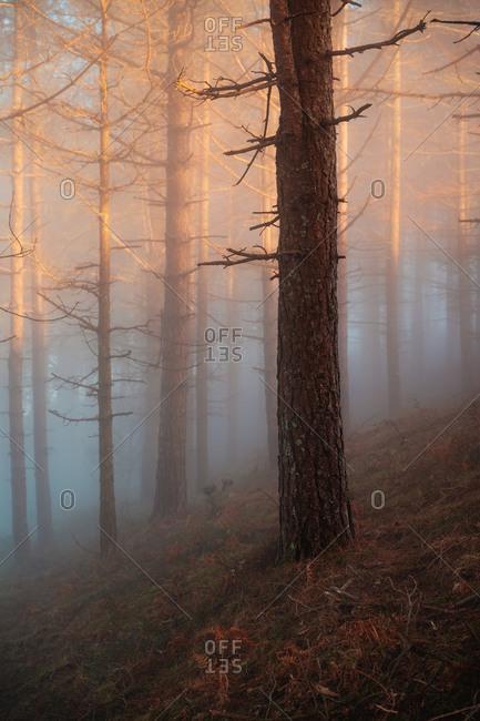 Golden sunset light illuminating the trees through the fog