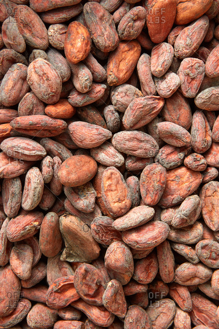 Organic cacao beans pattern as a background