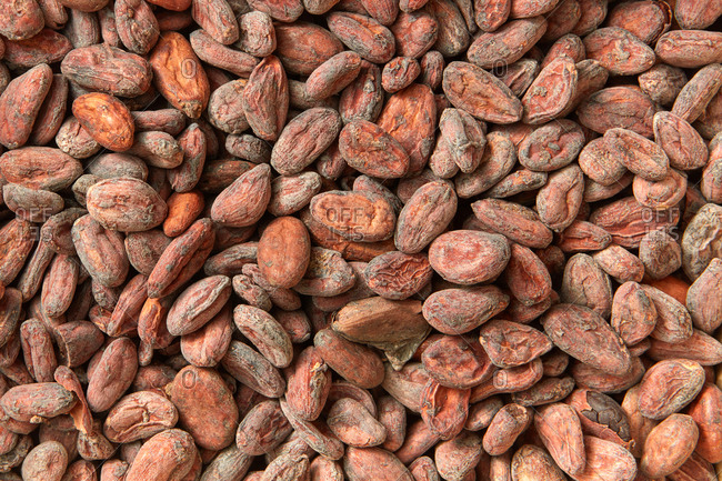 Fresh organic natural cocoa beans as a background, dry beans for making dark chocolate