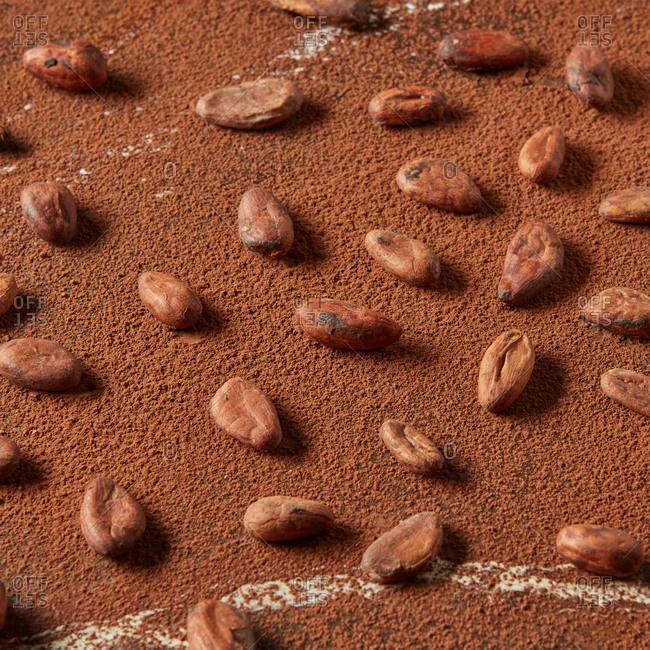 Cocoa powder background with freshly roasted natural organic beans with soft shadows and copy space