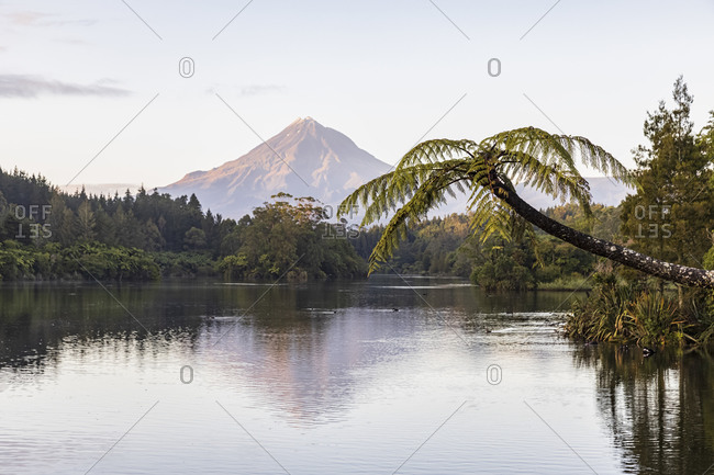 New Zealand- Palm tree growing on forested shore of Lake Mangamahoe with Mount Taranaki looming in background