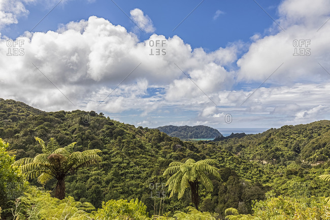 New Zealand- White clouds over green tropical forest