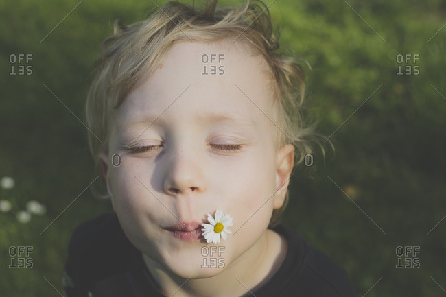 Portrait of blond little boy with daisy in his mouth