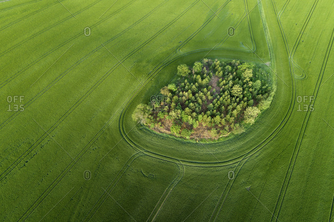 Germany- Thuringia- Aerial view of small grove in green countryside field