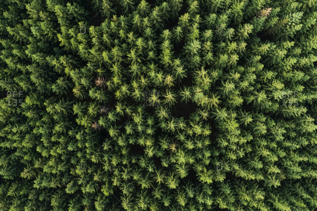 Germany- Thuringia- Aerial view of green coniferous forest