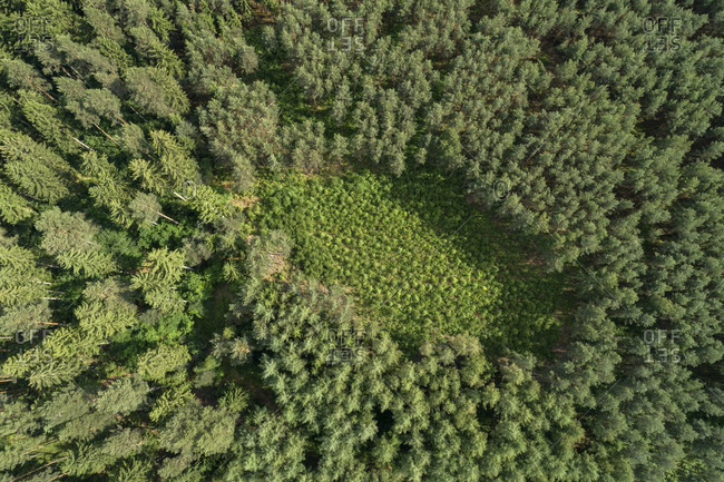 Germany- Thuringia- Aerial view of small clearing in green coniferous forest