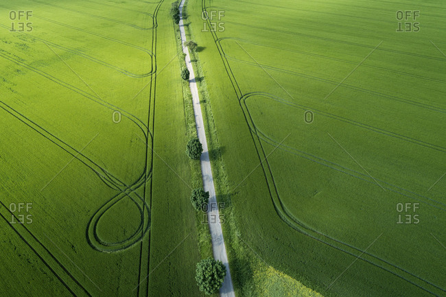 Germany- Thuringia- Aerial view of treelined road stretching between vast countryside fields