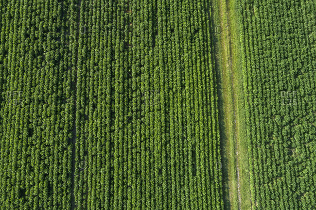 Germany- Bavaria- Aerial view of crops growing in green countryside field