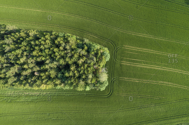 Germany- Bavaria- Aerial view of small grove and green countryside field