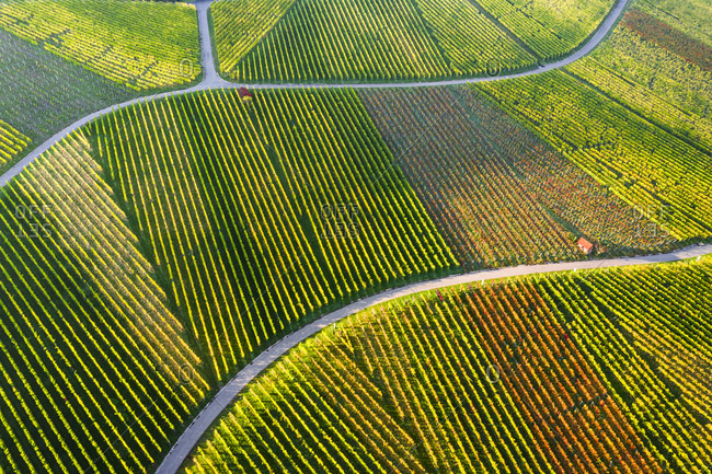 Germany- Baden-Wurttemberg- Stuttgart- Aerial view of vineyards on Kappelberg hill in autumn