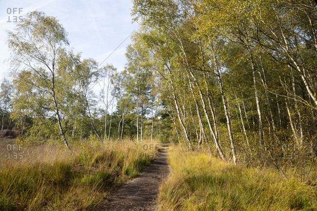 Germany- North Rhine-Westphalia- Birch trees beside empty footpath in Venner Moor nature reserve