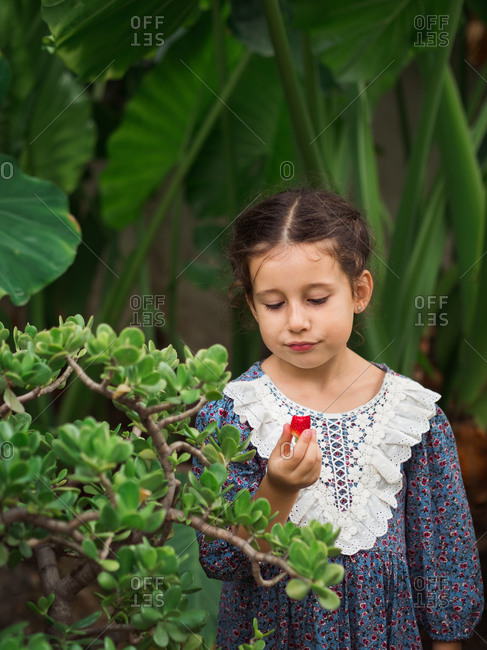 Little girl in retro dress trying piece of fruit while standing near green bushes on summer day in garden