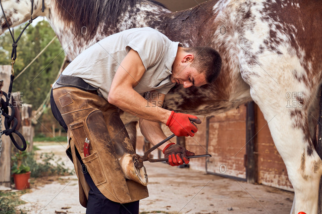 Farrier boy changing horseshoe in the stable