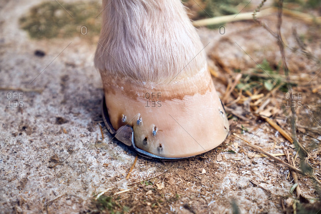 Horse hoof on the ground