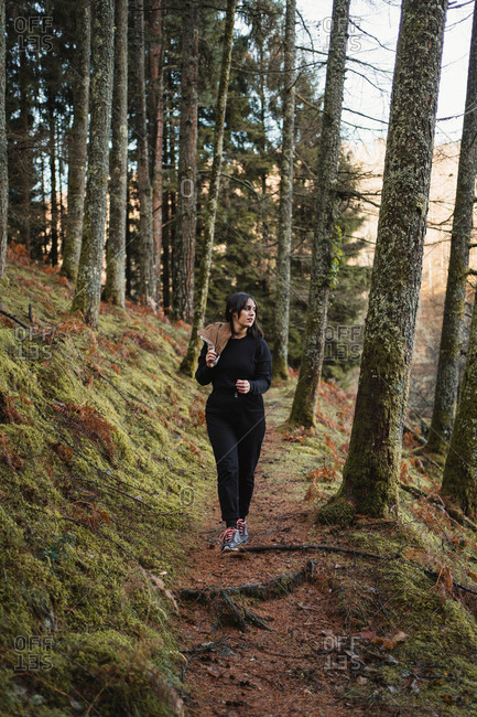 Young female traveler in black clothes walking on trail in calm autumn forest among pine trees with trunks covered with moss