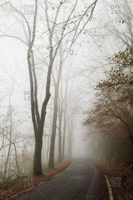 Empty narrow asphalt road leading through foggy autumn forest with bare trees at roadside in gloomy day