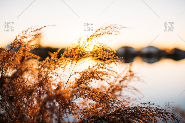 Sunset behind lakeside plant