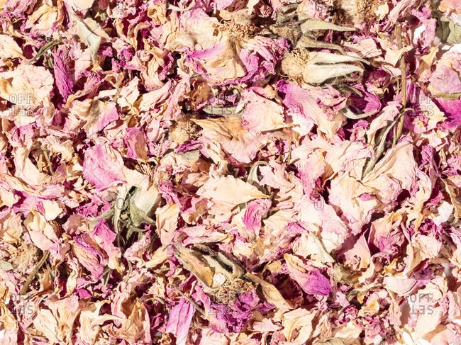 Close up of dried rose petals