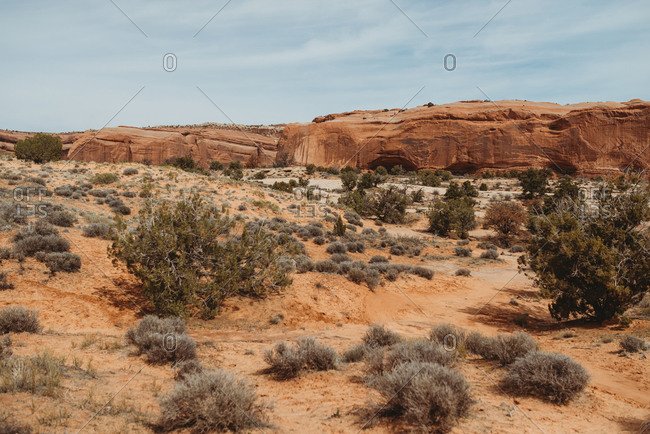 Canyons and desert plants in Canyonlands National Park, Utah