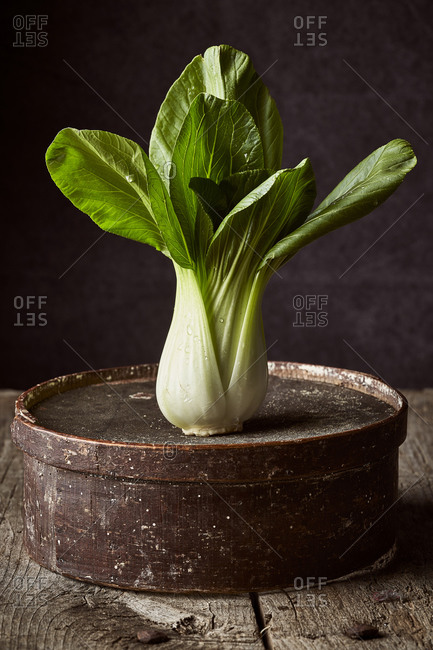 Fresh ripe book choy placed on weathered round box on wooden table