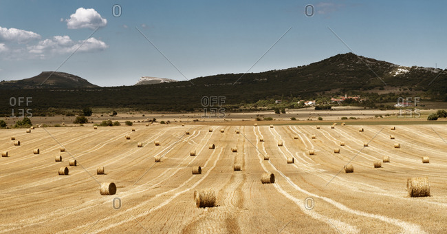Field on farmland full of hay rolls with mountains and slightly cloudy sky as background in countryside at midday