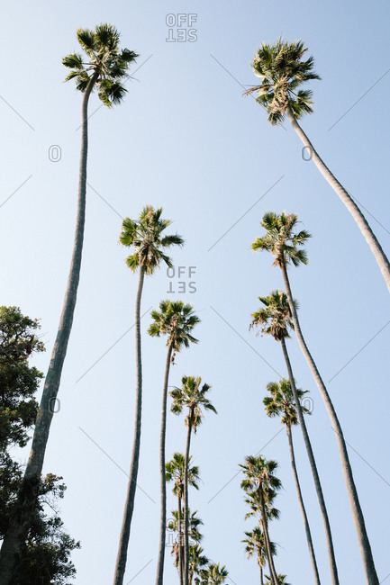 Low angle view of palm trees in Santa Monica, California