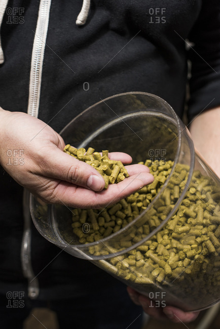 Bucket of hops in Brewery