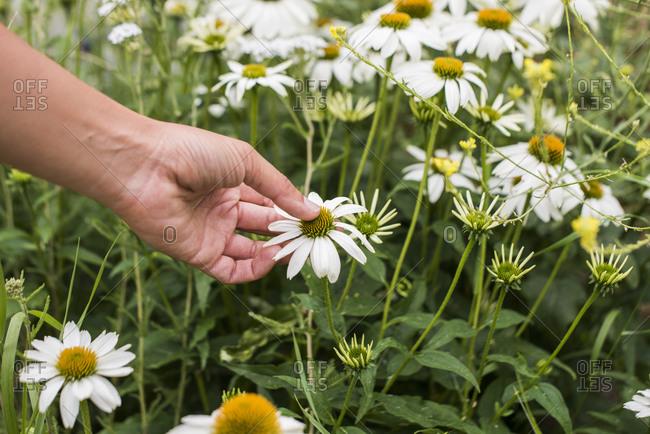 Hand touching flower head in garden