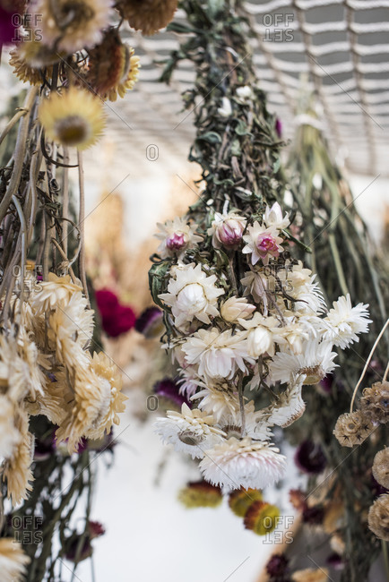 Bunches of flowers hanging to dry
