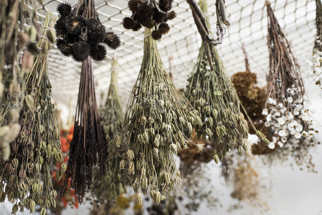 Floral bunches hanging to dry