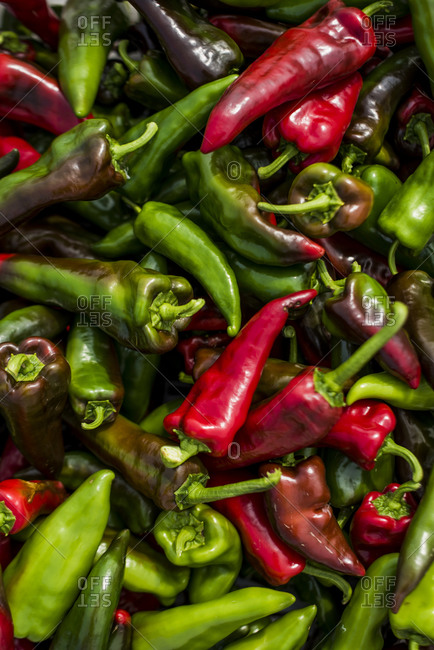 Close-up of harvested Poblano Peppers