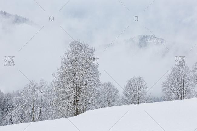 Snowy forest in Bad Kleinkirchheim, Carinthia, Austria, Europe
