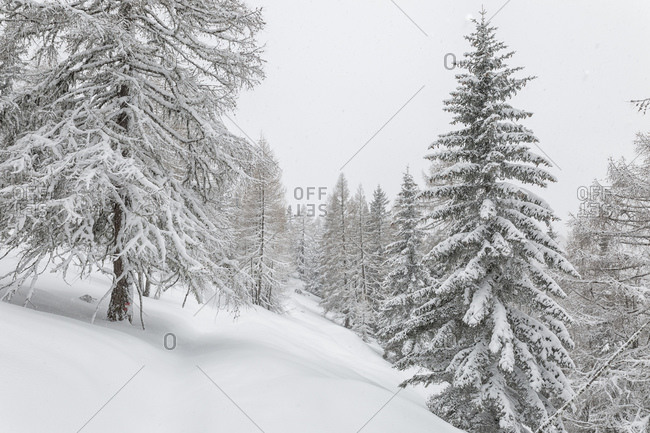 Winter landscape near Maibrunnbahn, Bad Kleinkirchheim, Nockberge mountains, Carinthia, Austria, Europe