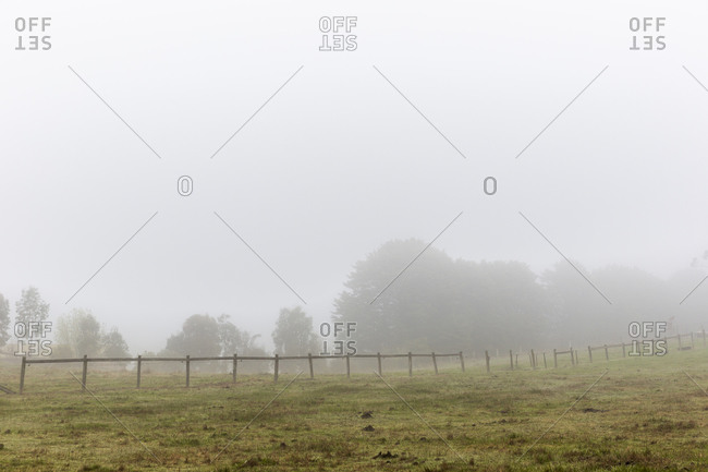 Empty green field with wooden fence and forest in background covered with heavy fog
