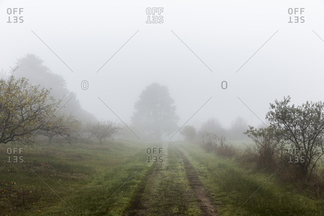 Straight empty rural dirt road with trails of cars leading along green field with trees in misty day