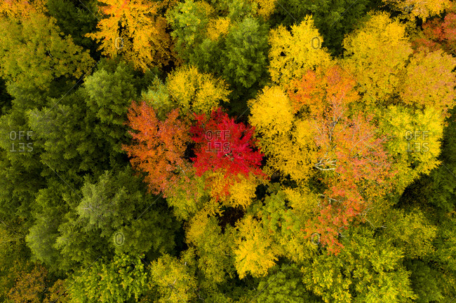 Beautiful fall colors in the forest from above in Brandon, Vermont