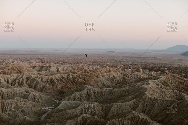 Bird flying over the Badlands desert landscape