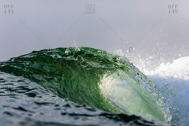 Green curling wave in the ocean
