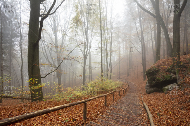 Germany- Saxony- Empty footpath in foggy autumn forest of Saxon Switzerland National Park