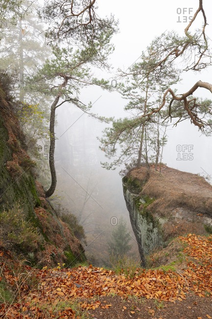 Germany- Saxony- Foggy autumn forest of Saxon Switzerland National Park