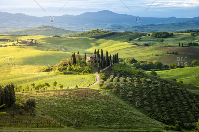 Country house on rolling hills in Val d'Orcia, Tuscany, Italy. Green meadow at springtime.