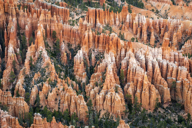 Forest in Bryce canyon surrounded by hoodoos, Bryce Point, Bryce Canyon National Park, Utah, USA