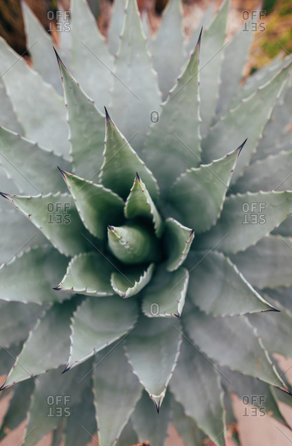 Close up of a succulent in a botanical garden