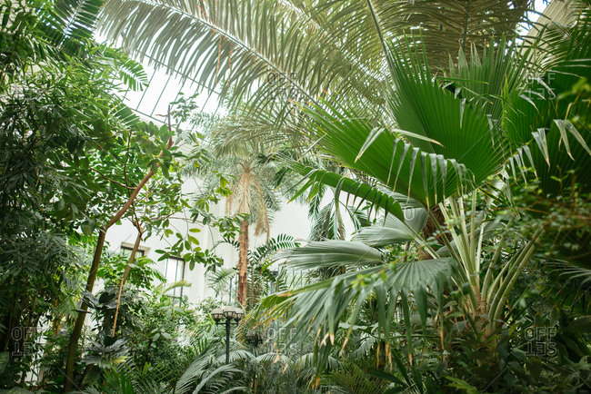Low angle view of plants and palms in a botanical garden in Budapest