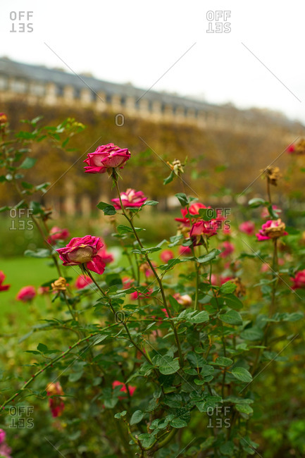 Palais Royal Garden in November