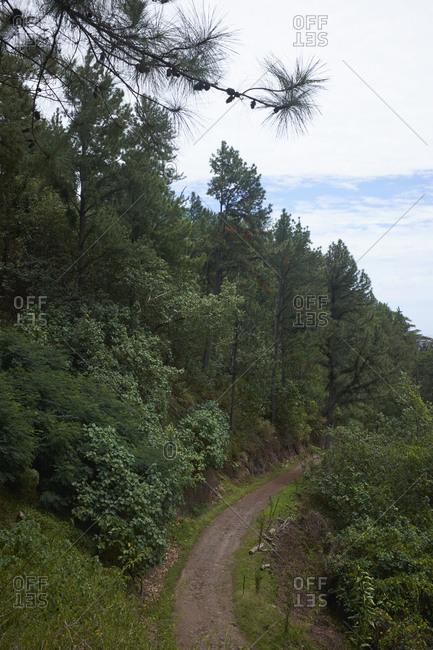 Green trees surrounding trail on the island of Mo'orea, French Polynesia