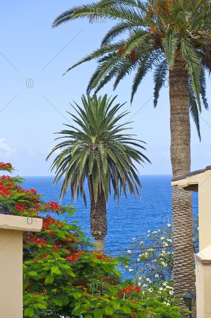 Canary Islands, Spain, La Palma - July 26, 2011: Palm trees by the sea