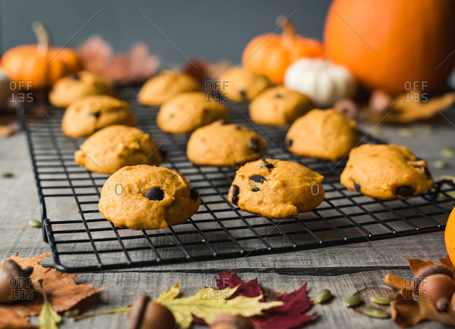 Close up of pumpkin chocolate chip cookies on a wire cooling rack.