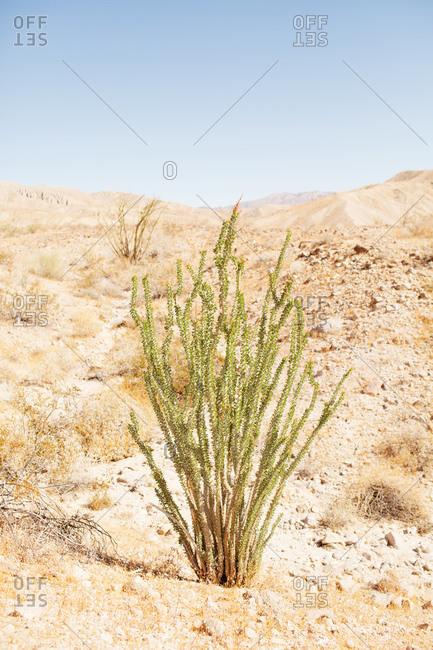 Desert plant mountain range