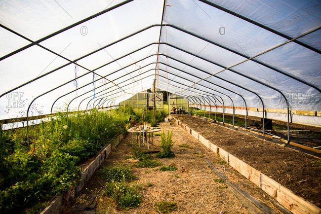 A greenhouse is overgrown before being cleaned up for growing